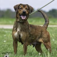Adopt A Pet :: Lanie - Ottumwa, IA