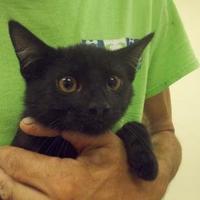 Adopt A Pet :: Tucker - Palm Coast, FL