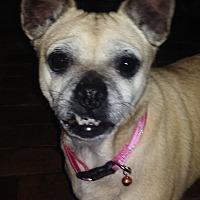 Adopt A Pet :: Goldie: smiles! (PA) - Spring City, TN