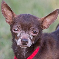 Adopt A Pet :: Prancer - Hillside, IL