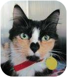 Calico Cat for adoption in Springfield, Massachusetts - Friskie