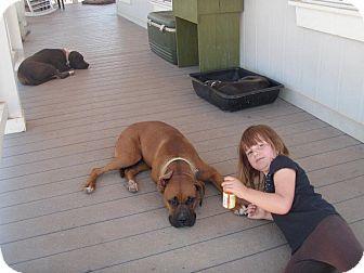 Boxer/Labrador Retriever Mix Dog for adoption in Sacramento, California - Tuff, LOVES KIDS