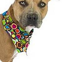 Adopt A Pet :: Harp - Orlando, FL