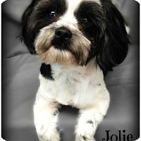 Adopt A Pet :: Jolie - Pascagoula, MS