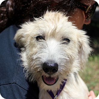 Terrier (Unknown Type, Medium) Mix Dog for adoption in Monroeville, Pennsylvania - CATHY