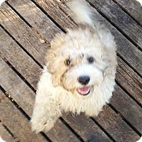 Adopt A Pet :: Sammie ADOPTED!! - Antioch, IL