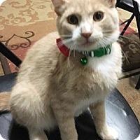 Adopt A Pet :: TootsieL - North Highlands, CA