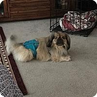 Adopt A Pet :: Maddox - Richmond, VA
