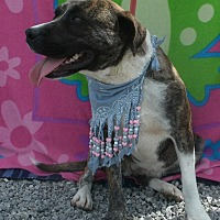 Adopt A Pet :: Josie - Jamestown, TN