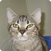 Adopt A Pet :: Nadine - Georgetown, TX