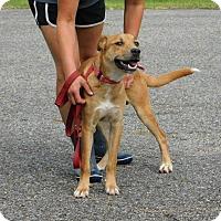 Adopt A Pet :: Lucas - Oakdale, LA