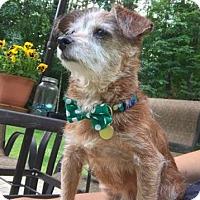 Adopt A Pet :: Tinker - Brattleboro, VT