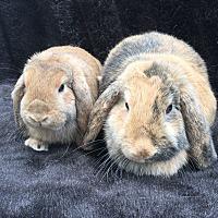 Adopt A Pet :: Violet & Zinnia - Watauga, TX