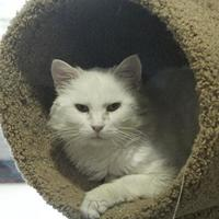 Adopt A Pet :: Weezer - Potsdam, NY