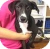 Border Collie Mix Dog for adoption in Portsmouth, New Hampshire - Bree