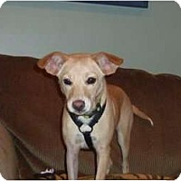 Adopt A Pet :: Toby - Pending - Vancouver, BC