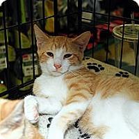 Adopt A Pet :: Finley - Farmingdale, NY