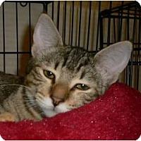 Adopt A Pet :: Trixie - lake elsinore, CA