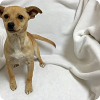 Adopt A Pet :: Matilda - Mission Viejo, CA