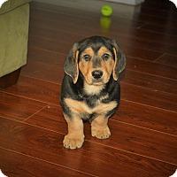 Adopt A Pet :: Fred - Marietta, GA