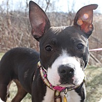 Adopt A Pet :: Gabbie - Howell, MI