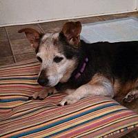 Adopt A Pet :: Missy - Franklin, GA