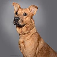 Adopt A Pet :: Wayne - Missouri, TX