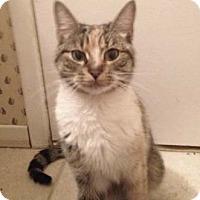 Adopt A Pet :: Addison - Merrifield, VA