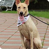 Adopt A Pet :: Fiona - San Mateo, CA