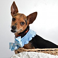 Adopt A Pet :: Ms. Rita - thibodaux, LA