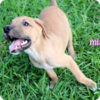 Adopt A Pet :: Mia - Groton, MA