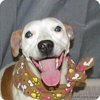 Adopt A Pet :: Trixy - Crossville, AL