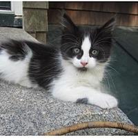 Adopt A Pet :: Poppy - Newtown, CT