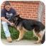 Photo 2 - German Shepherd Dog Dog for adoption in Los Angeles, California - Malli von Barnes