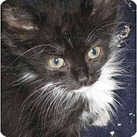 Adopt A Pet :: Storm - Davis, CA