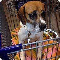Adopt A Pet :: Cranberry - Transfer, PA