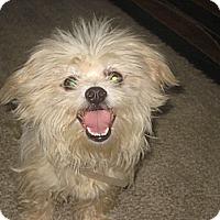 Adopt A Pet :: Faith - Playa Del Rey, CA