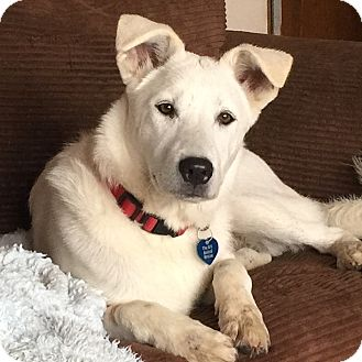Jindo/Shepherd (Unknown Type) Mix Dog for adoption in Mission Viejo, California - Kuma