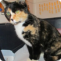 Adopt A Pet :: COURTESY POST - Phoebe - Chambersburg, PA
