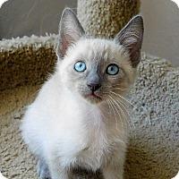 Adopt A Pet :: Elijah - Davis, CA