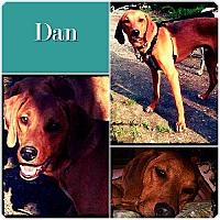 Adopt A Pet :: Dan ADOPTED - Ontario, ON