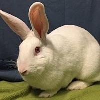 Adopt A Pet :: Hermione - Woburn, MA