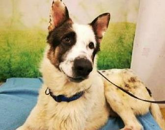 Anatolian Shepherd Mix Dog for adoption in Tangent, Oregon - Wallace