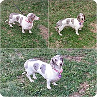 Adopt A Pet :: Cinnamon & Snoopy - Crocker, MO