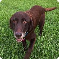 Adopt A Pet :: Cheney - Jay, NY