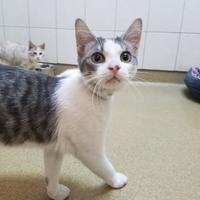 Adopt A Pet :: Royce - Miami, FL