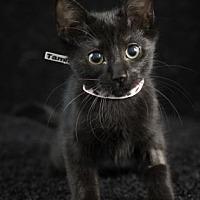 Adopt A Pet :: Tammy - Gainesville, FL