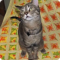Adopt A Pet :: Razzle - Cleveland, OH