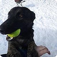 Adopt A Pet :: Puma in SC - Jamestown, CA