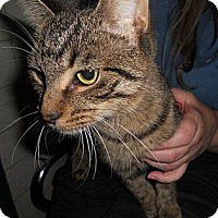 Adopt A Pet :: Cindy - Sterling Hgts, MI